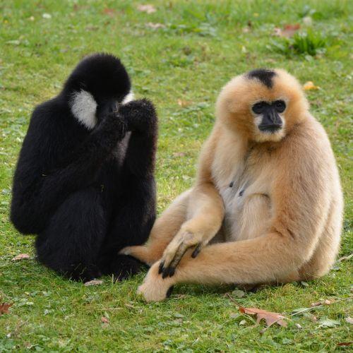 monkeys mammal animal