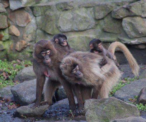 monkeys wildlife zoo