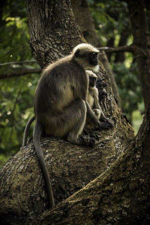 monkeys  little monkey  monkey
