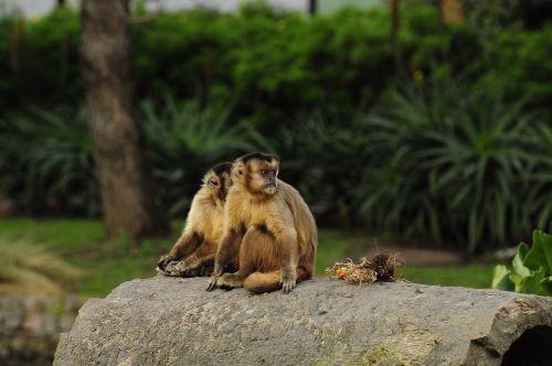 mono nature fauna