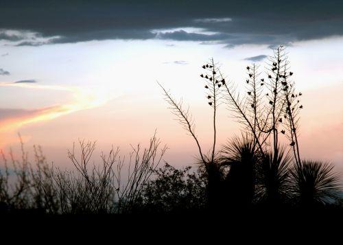 monsoon sky silhouette
