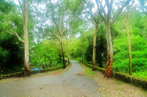 Monsoon Forest Road