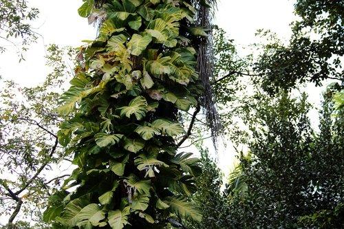 monstera  vines  pot flowers