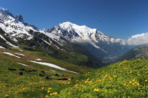 mont blanc tour mont blanc alps