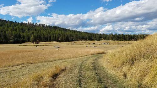 montana field nature