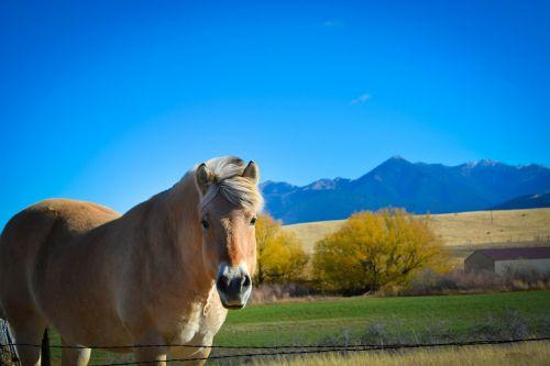 montana horse mountain range
