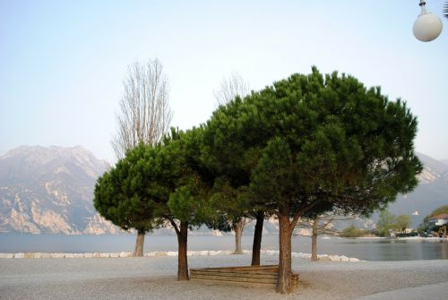 mood garda trees