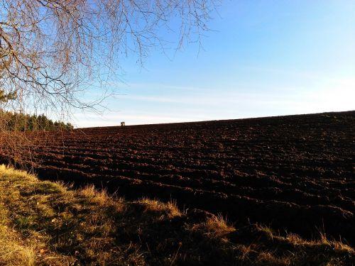 mood evening light field