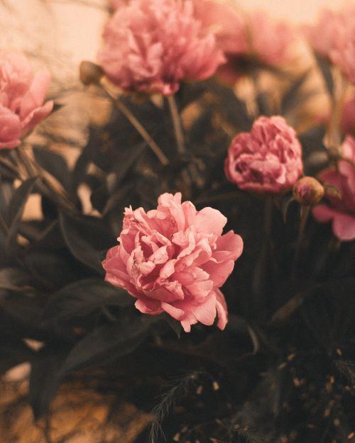 moody flowers interior