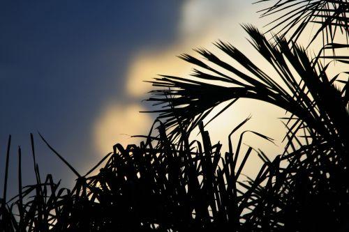 Moody Sky Behind Palm