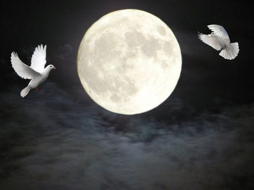 moon doves clouds
