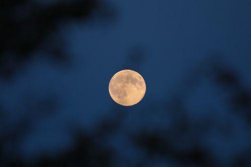 mėnulis,pilnatvė,naktis,super mėnulis,pilnatis,dangus,mėnulis,kruvinas mėnulis,naktinis dangus,tamsi
