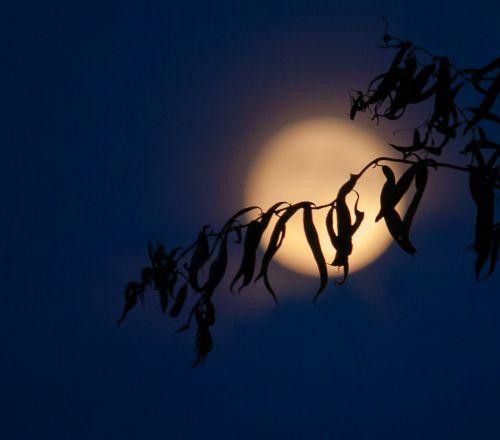 moon full moon night