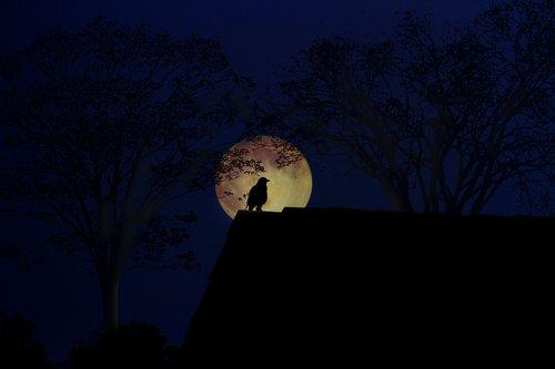 moon  dark  light