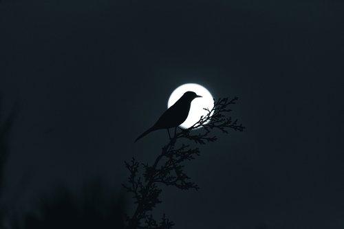 moon  planetary moon  moonlight