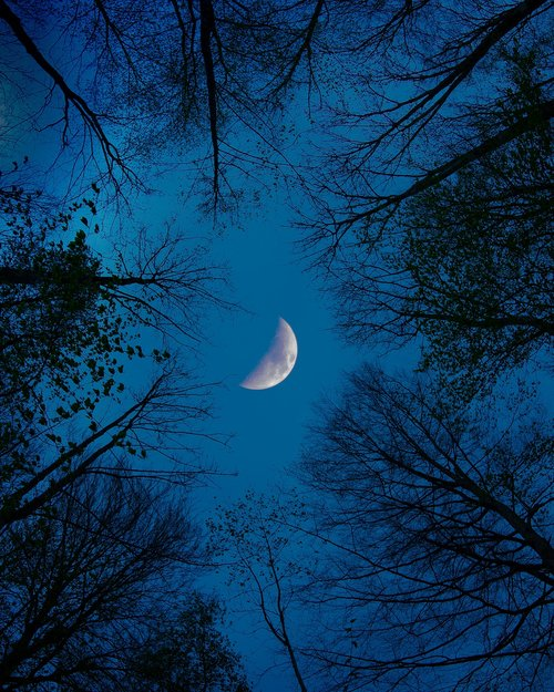 moon  forest  night