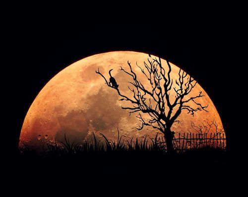 moon moon night full moon