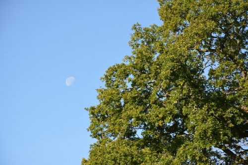 moon in the day tree himmel