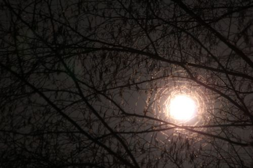 moon through branches moon branches