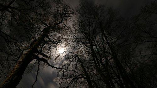 moonlight  forest  night