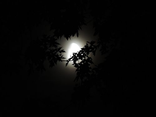 moonlight through trees moonlight halloween