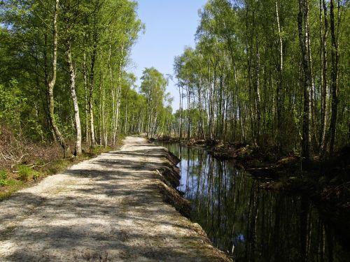 moor water birch