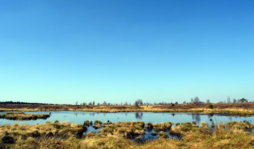 moor,peat bog,venn,high venn,nature conservation,nature reserve,belgium,landscape,mood,nature,national park,swamp,lonely,wide,moorland,swampy,wetland,moist,wetlands,marsh,swamp grass,moor grass,reed