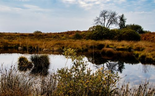 moor landscape nature