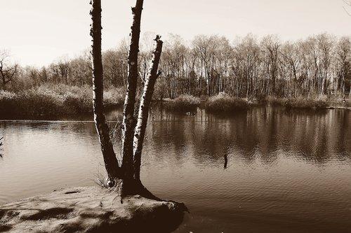 moor  eppendorfer moor  nature reserve