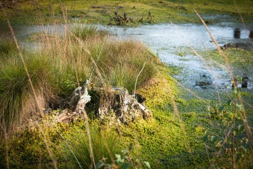 moor,nature,water,nature conservation,landscape,marsh,nature reserve,wetland,grass,grasses