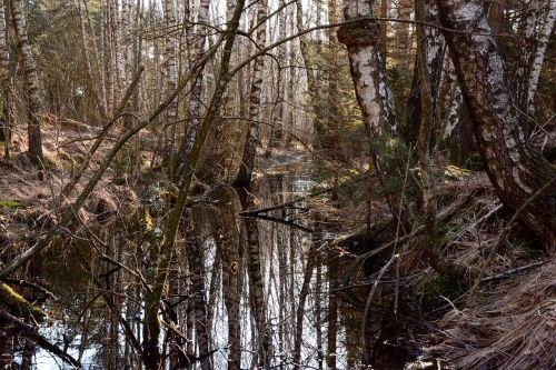 moor swamp moist
