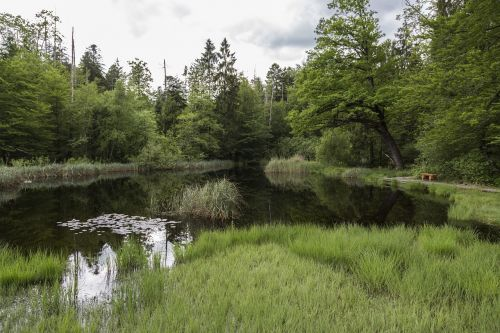 moor moorland swamp