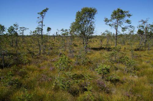 moor moorland grasses