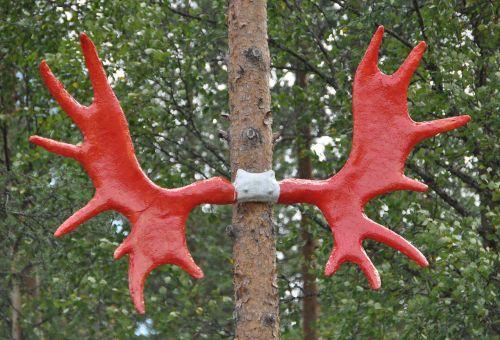 briedis,antler,Norvegija,briedis,raudona,miškas,gamta,spalvinga