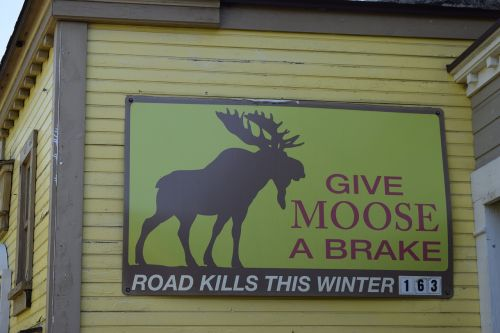 moose road kill sign