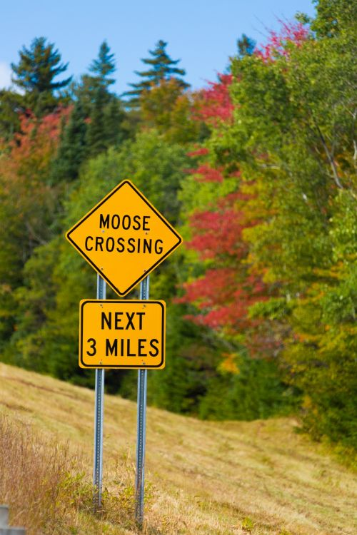 free photos moose crossing sign search download