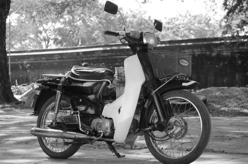 moped lonely only