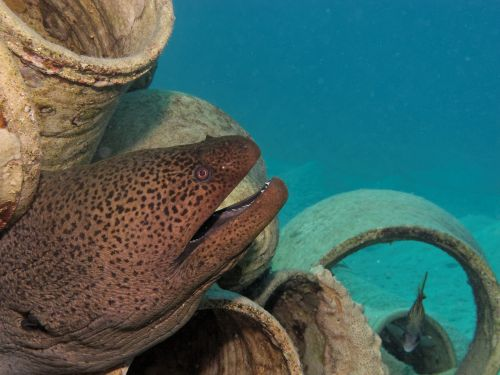 moray fish underwater