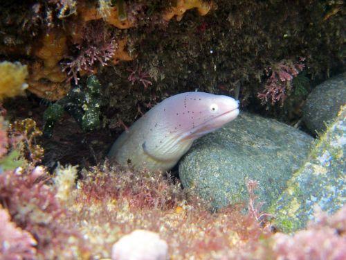 moray eel sea-life