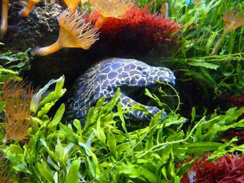 moray water underwater