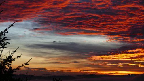morgenrot sky tree
