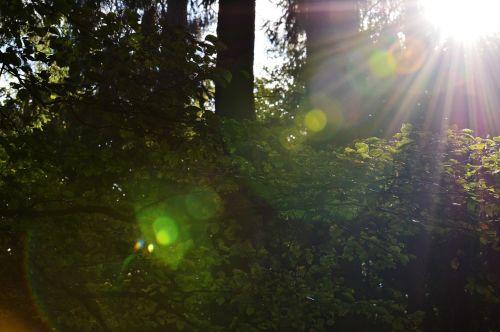 morgenstimmung forest back light