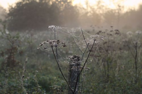 morgentau spider webs fog