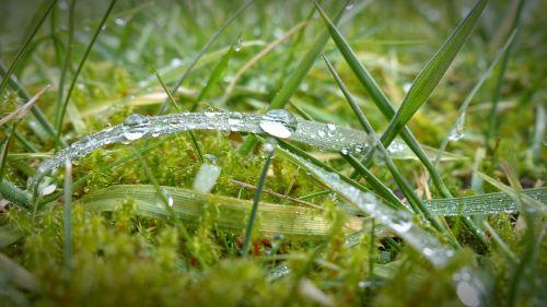 morgentau drip dewdrop