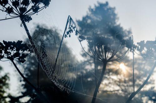 morgentau network cobweb