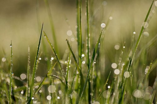 morgentau  dewdrop  grass