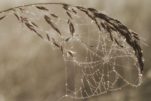 morgentau in cobweb dewdrop cobweb