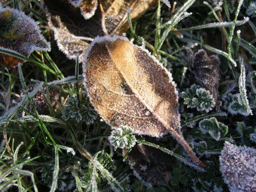 morning meadow hoarfrost