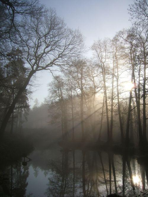 morning forest haze
