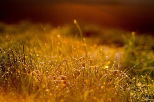 morning dew morgentau
